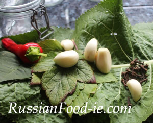 Russian pickled tomatoes recipe. Herbs and spices