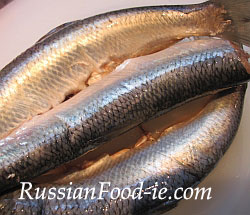 Russian salted herrings, recipe. Fresh herring