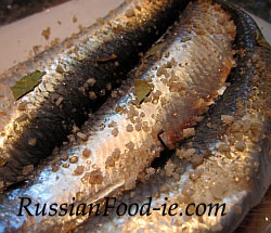 Russian salted herrings (seledka). Pickling herrings, recipe, Russian starter